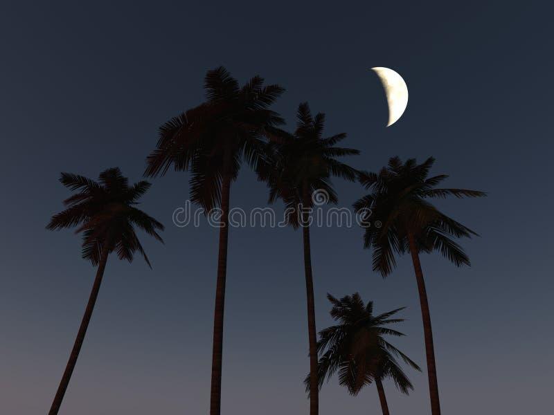 ладонь кокоса стоковая фотография rf