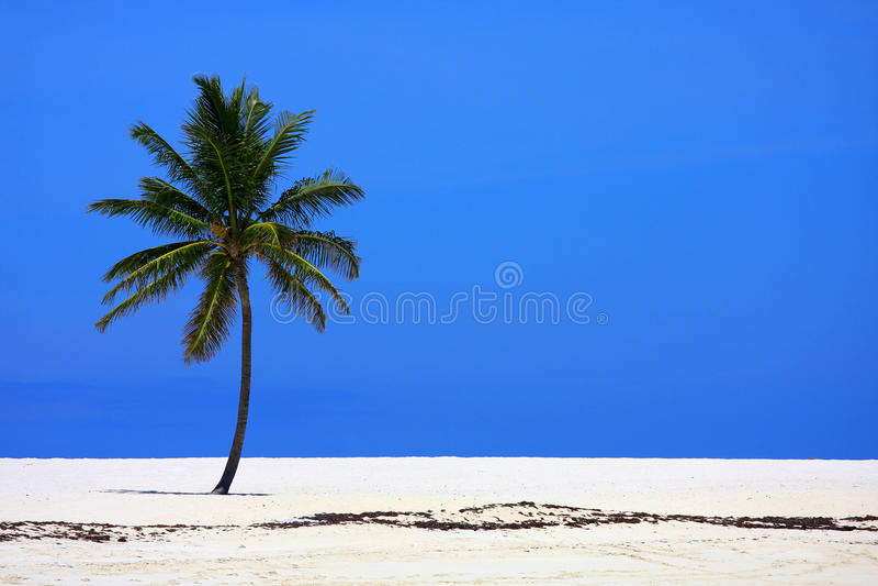 ладонь пляжа стоковое изображение