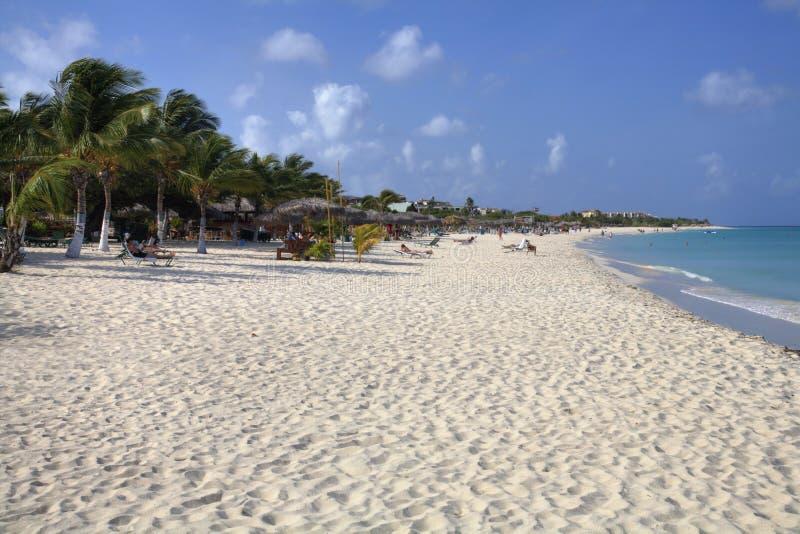 ладонь пляжа aruba стоковое изображение rf