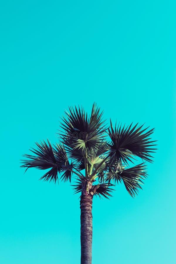 Ладонь сахара на голубом небе стоковая фотография