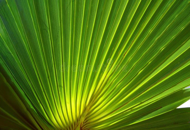 ладонь fronds зеленая стоковые фотографии rf