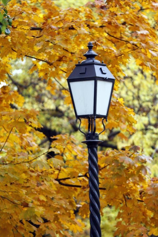 Лампа в парке осени стоковые фото