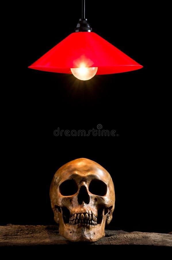 Лампа и череп на древесине стоковая фотография rf