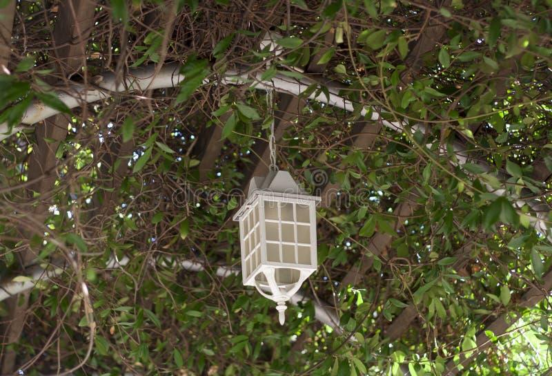 Лампа на веранде лета дерева перерастанной при фонарики вися от дерева стоковое фото rf