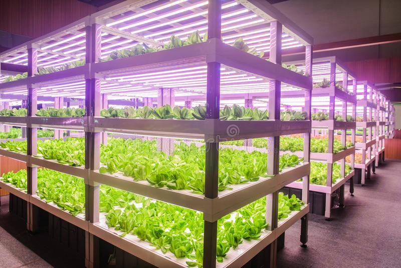 Лампа приведенная выращивания растения используемая в вертикальном земледелии стоковое изображение
