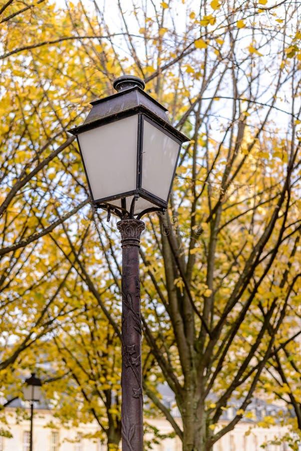 Лампа уличного света на предпосылке ветвей листьев осени красивых ярких оранжевых пестротканых великолепия дерева чудесного na стоковое фото rf