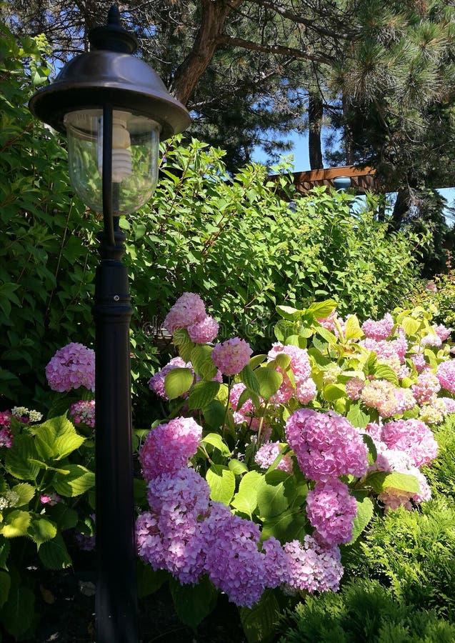 Лампа, цветки, лето стоковые фотографии rf