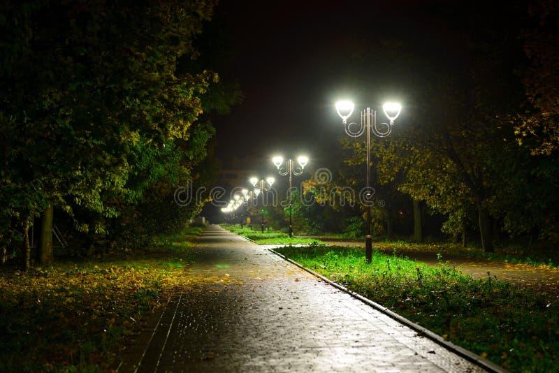 Лампы фонариков ночи парка: взгляд дорожки переулка, тропа в парке с деревьями и темное небо как предпосылка на eveni лета стоковая фотография