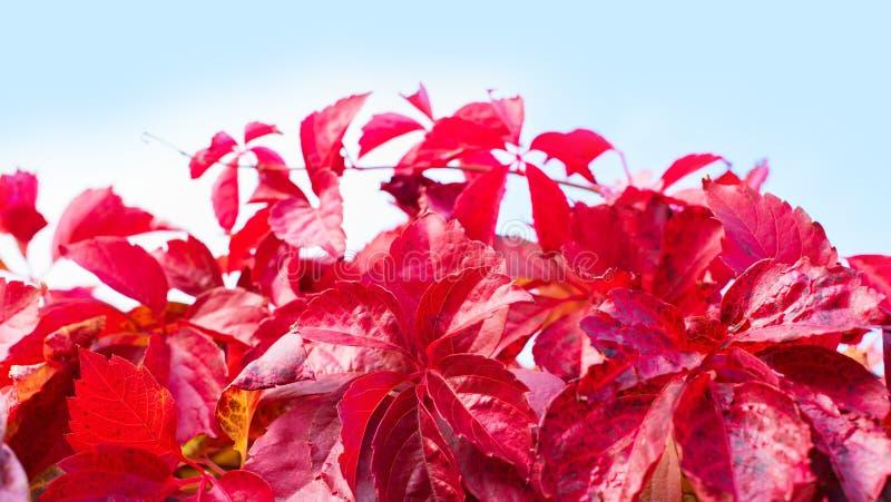 Ландшафта осени загородки природного парка листвы завода осени знамени фокус красного деревянного ретро красивого выборочный стоковые фото