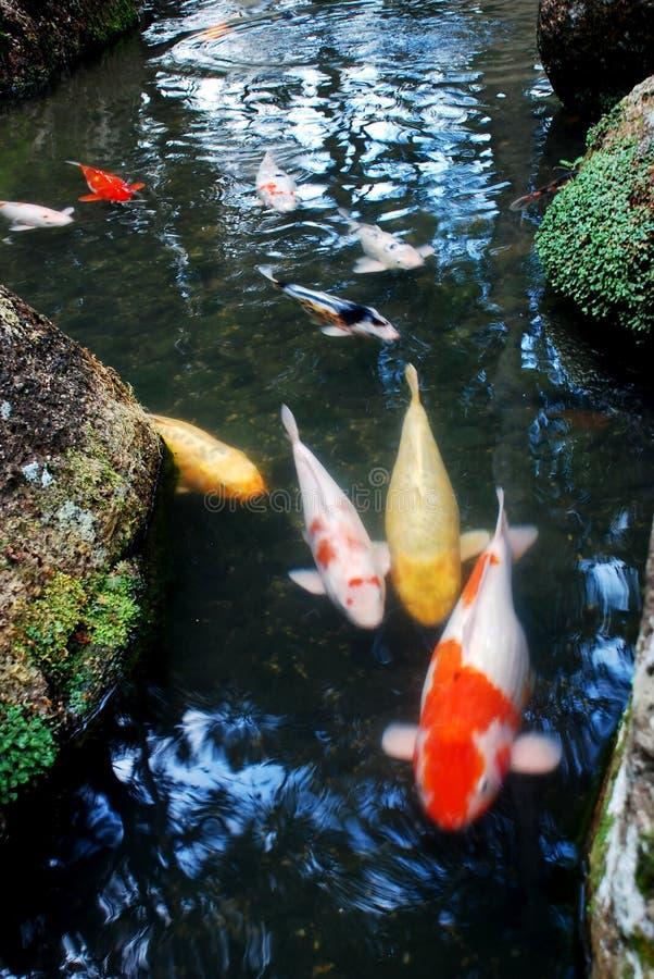 ландшафты рыб стоковое фото rf