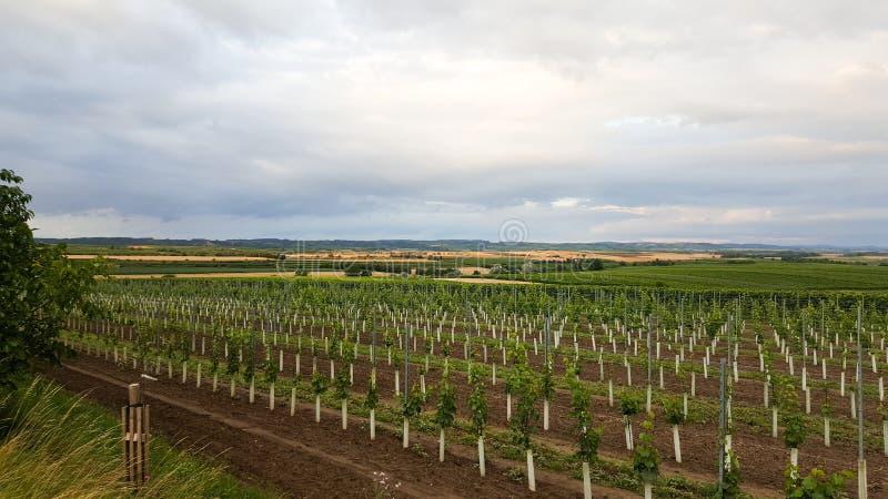 Ландшафт австрийских виноградников с облачным небом стоковое фото rf