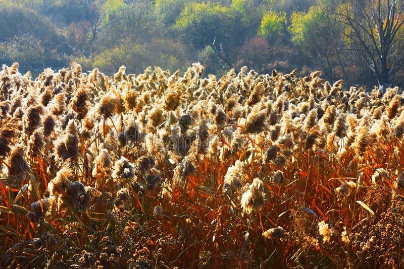 Ландшафт болотоа стоковая фотография