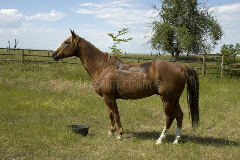 ландшафт Вайоминг лошади стоковое фото