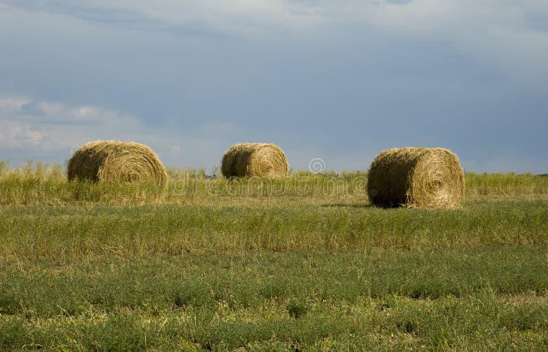 ландшафт Вайоминг сена стоковые изображения rf