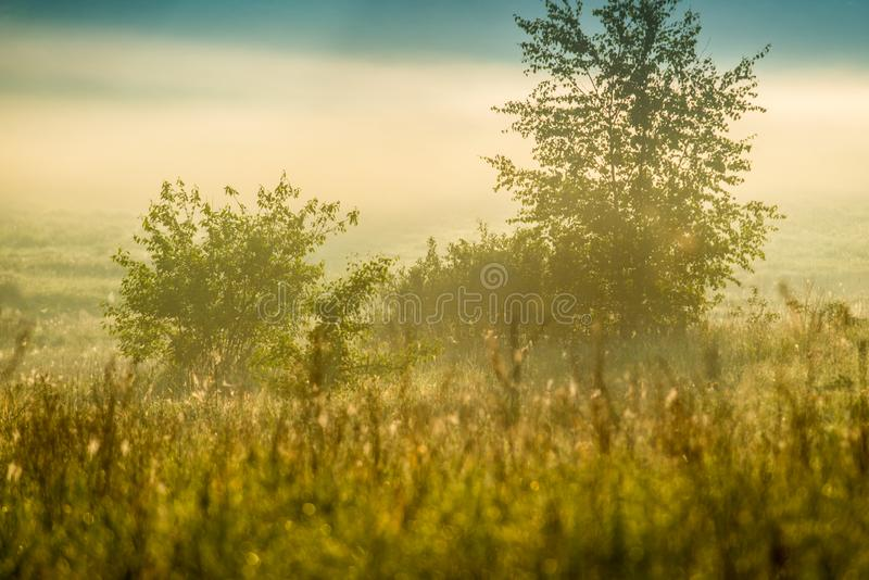 Ландшафт весны деревьев и тумана стоковое фото