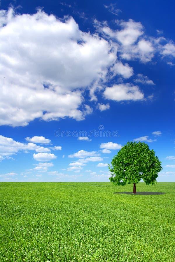 Ландшафт весны, зеленое дерево стоковое изображение