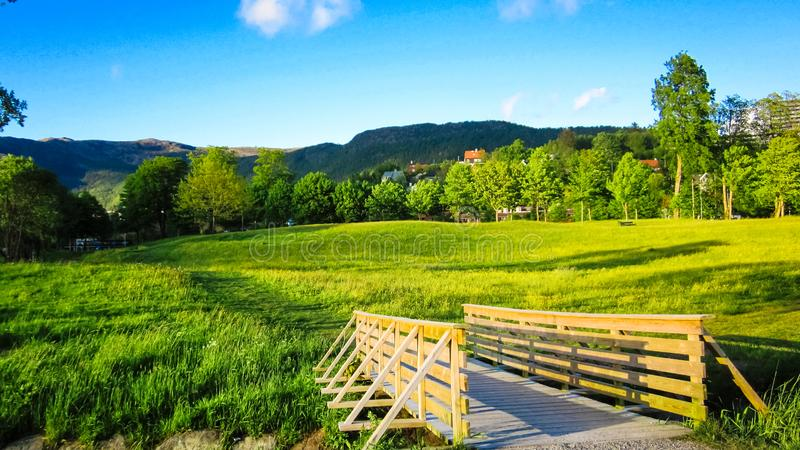 Ландшафт весны с деревянным мостом, лугом желтых лютиков и зелеными деревьями в солнечности стоковые фотографии rf