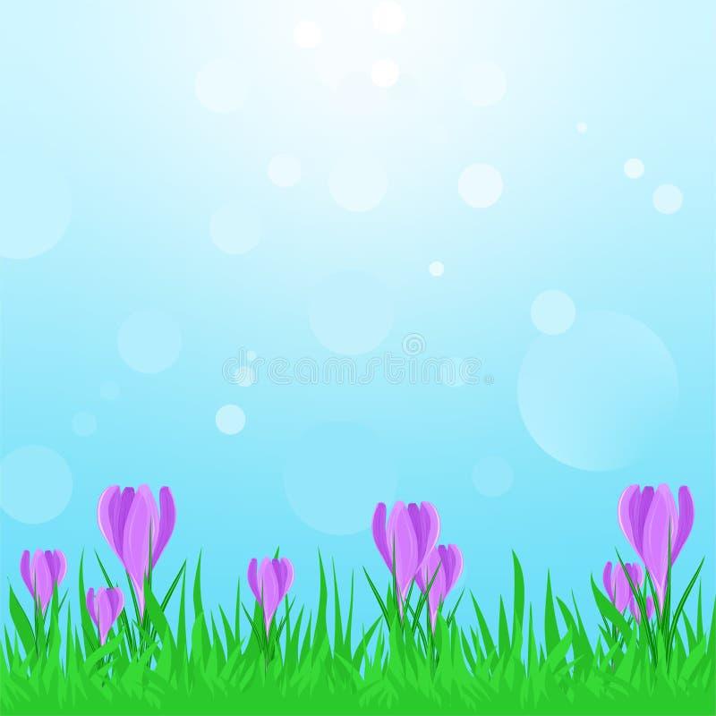 Ландшафт весны с зеленой травой с фиолетовыми цветками весны и голубым небом с отражениями солнца Солнечность крокуса весной бесплатная иллюстрация