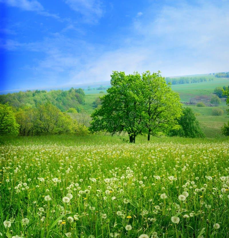 Ландшафт весны стоковое фото rf