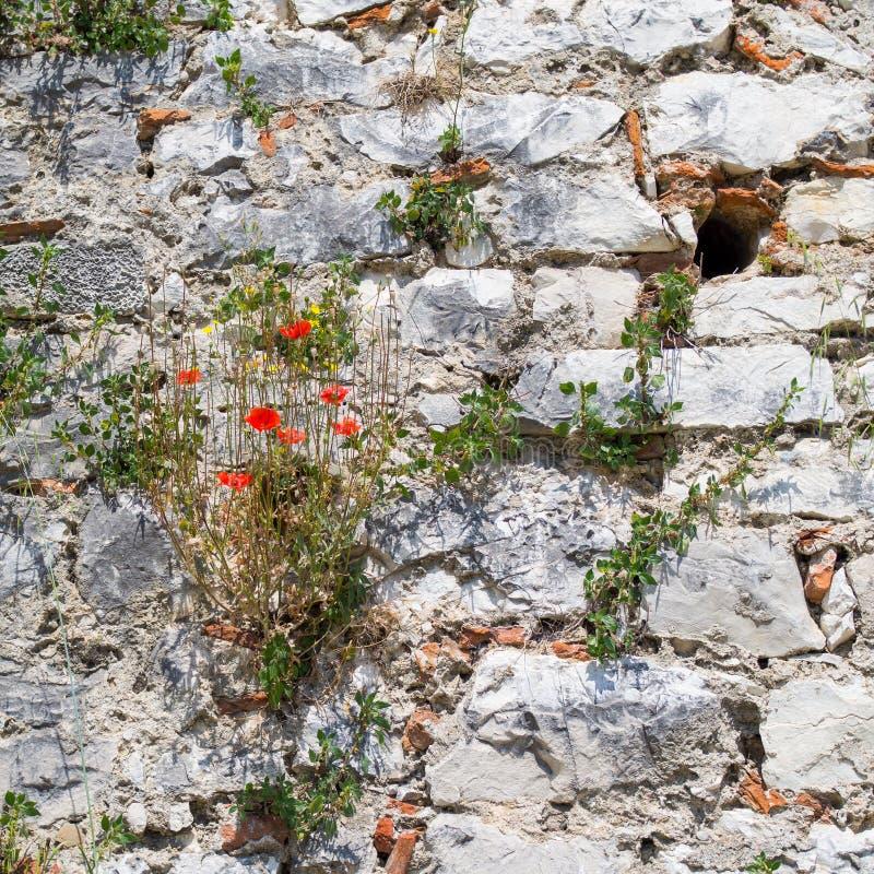 Ландшафт взгляда от старого замка исторического города Berat в Албании стоковая фотография