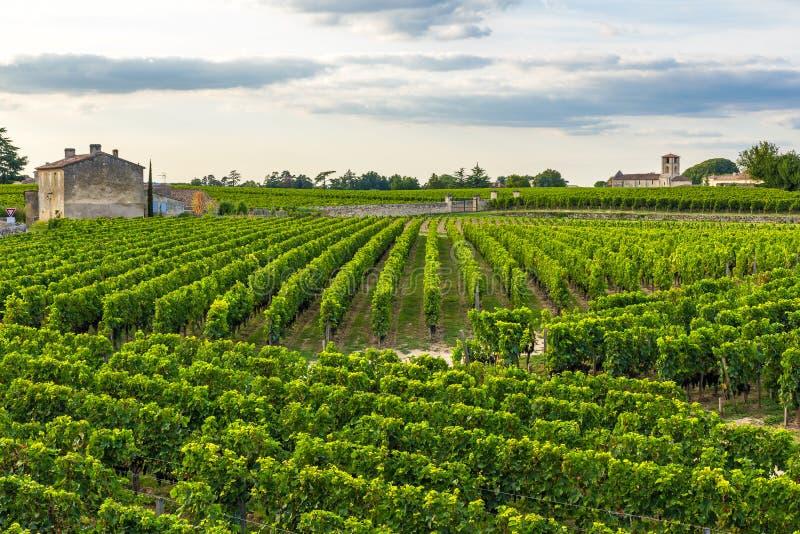 Ландшафт виноградников Бордо красивый виноградника Emilion Святого во Франции стоковое фото