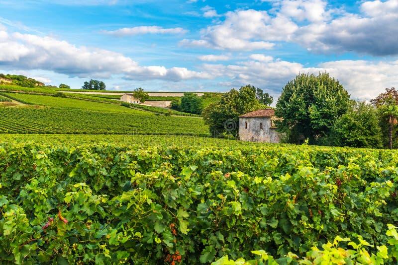 Ландшафт виноградников Бордо красивый виноградника Emilion Святого во Франции стоковые изображения