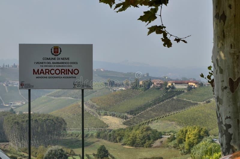 Ландшафт виноградников Barbaresco стоковые фото