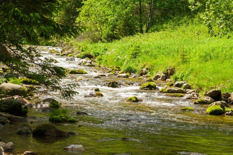 Ландшафт в долине ` Koscielisko ` в Польше Пропуская гора течет и полный зеленой травы и листьев стоковое изображение