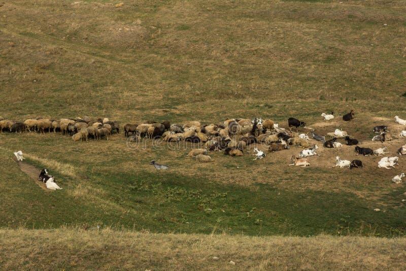 Ландшафт в Молдавии стоковое изображение