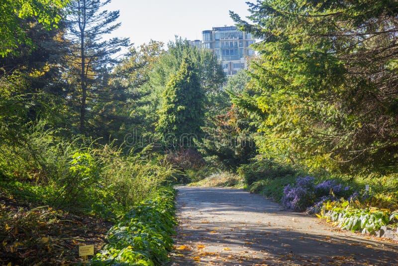 Ландшафт в октябре осени красочные desiduous деревья - солнечный взгляд осени Сад академичного университета Fomin ботанический дл стоковые изображения rf