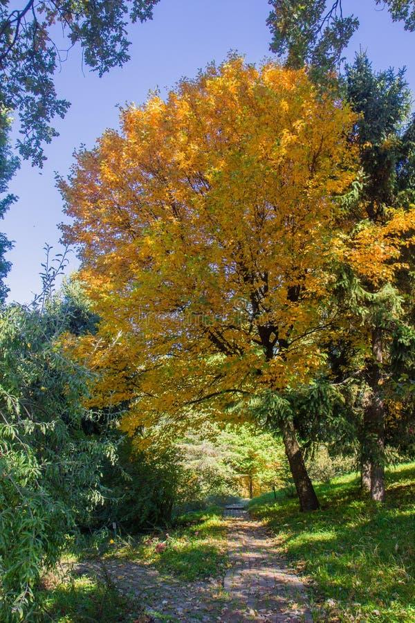 Ландшафт в октябре осени красочные desiduous деревья - солнечный взгляд осени Сад академичного университета Fomin ботанический дл стоковые фотографии rf