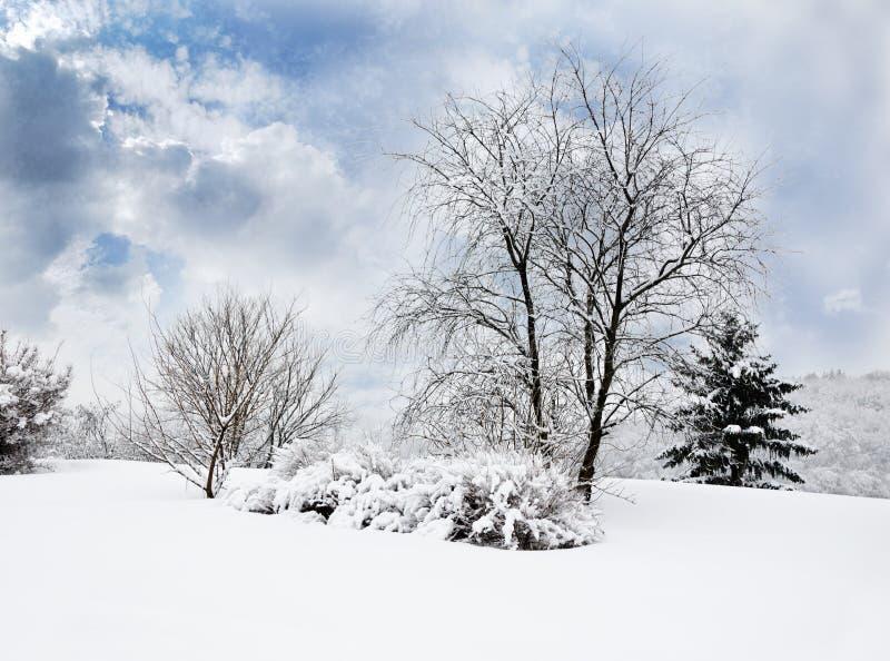 Ландшафт в парке зимы стоковое фото rf