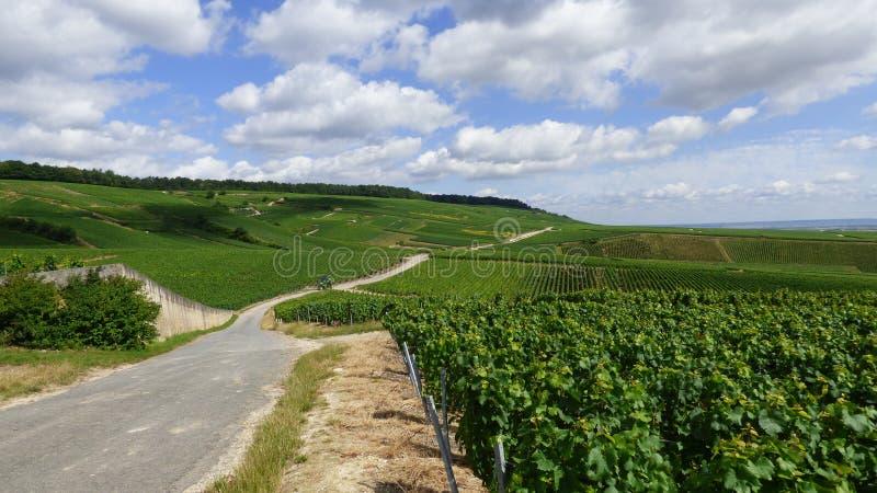 Ландшафт в регионе шампанского стоковые изображения rf