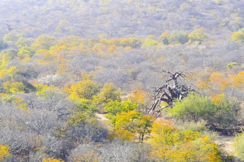 Ландшафт в Mapungubwe стоковое фото rf