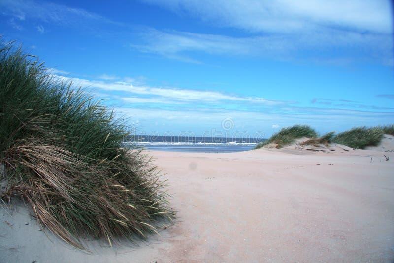 ландшафт голландеца дюны стоковые изображения rf
