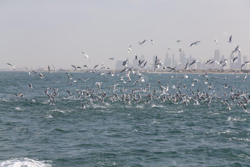 Ландшафт горизонта города Дубай при птицы улавливая рыб внутри стоковые изображения