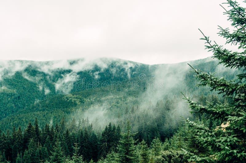 Ландшафт горы, место в тумане осени стоковые изображения