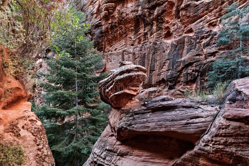 Ландшафт горы на каньоне в национальном парке Сиона в Юте, США стоковые изображения