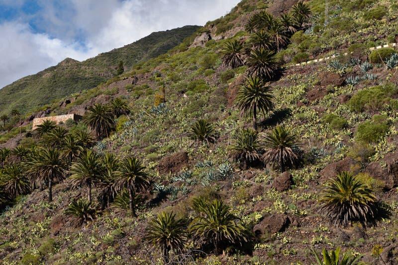 Ландшафт горы на тропическом острове Тенерифе, канерейке в Испании стоковое фото