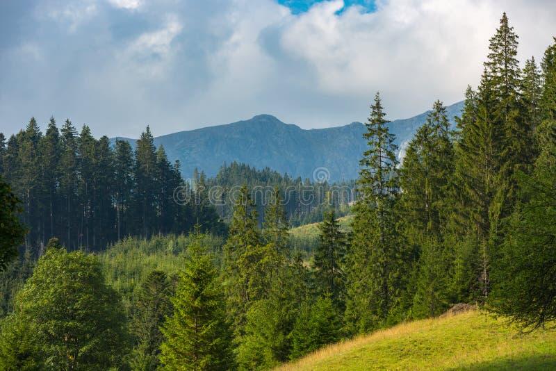 Ландшафт горы с лесом стоковые изображения rf