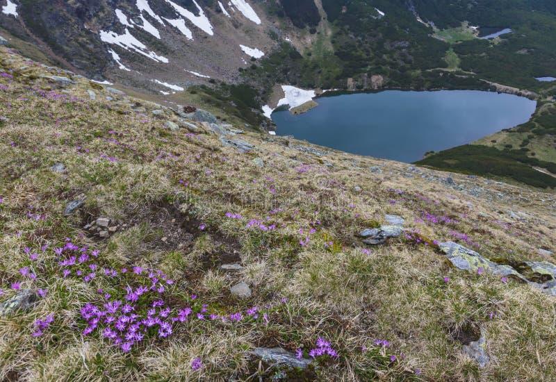 Ландшафт горы с цветками и озером в дне overcast стоковая фотография rf