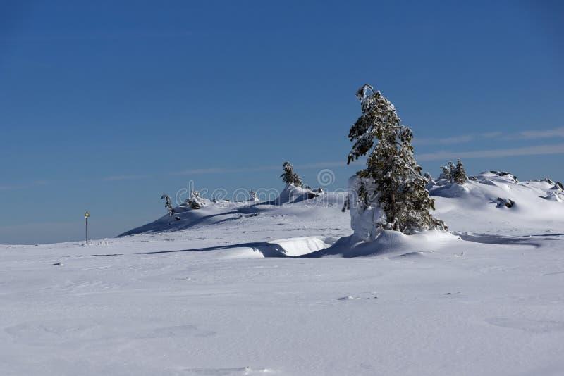 Ландшафт горы Vitosha, регион зимы города Софии, Болгария стоковое фото rf