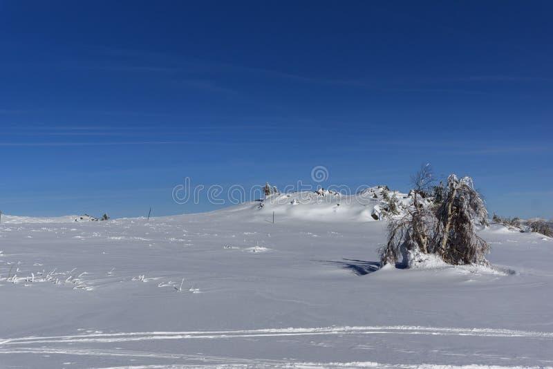 Ландшафт горы Vitosha, регион зимы города Софии, Болгария стоковое изображение