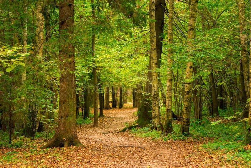 Ландшафт -го сентябрь, осени в лесе, деревья стоковые изображения rf