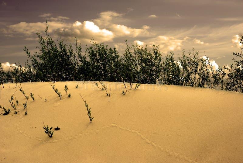 ландшафт дюны стоковые изображения rf