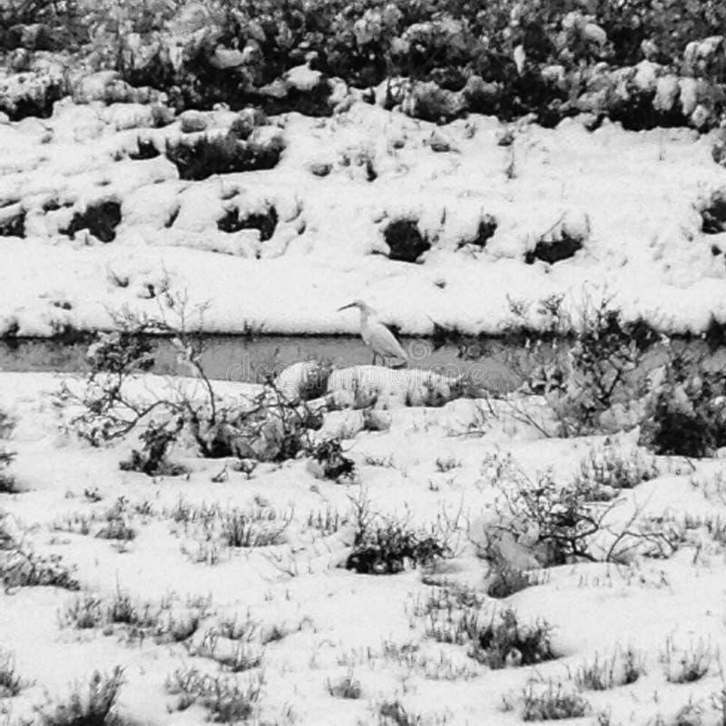 Ландшафт заболоченного места зимы стоковые изображения rf