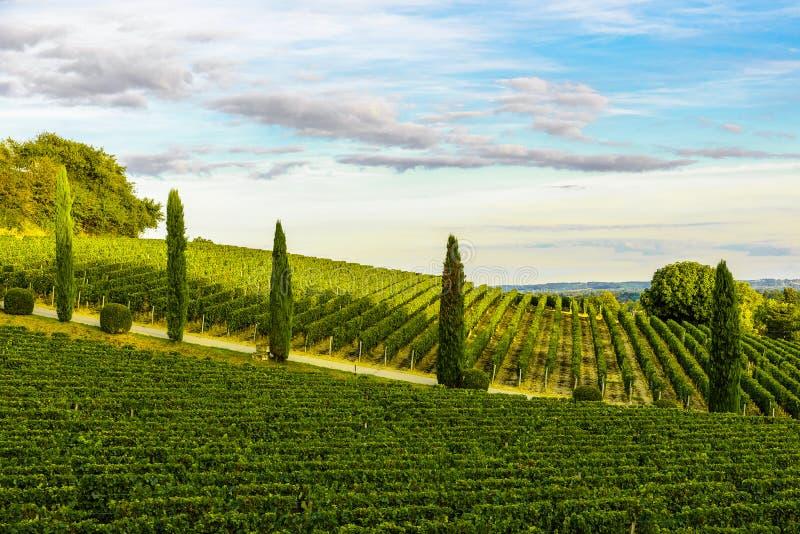 Ландшафт захода солнца виноградников Бордо в Франции стоковое фото