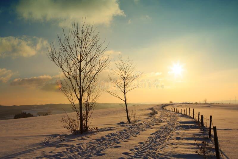 Ландшафт захода солнца зимы с деревом и дорогой стоковое фото