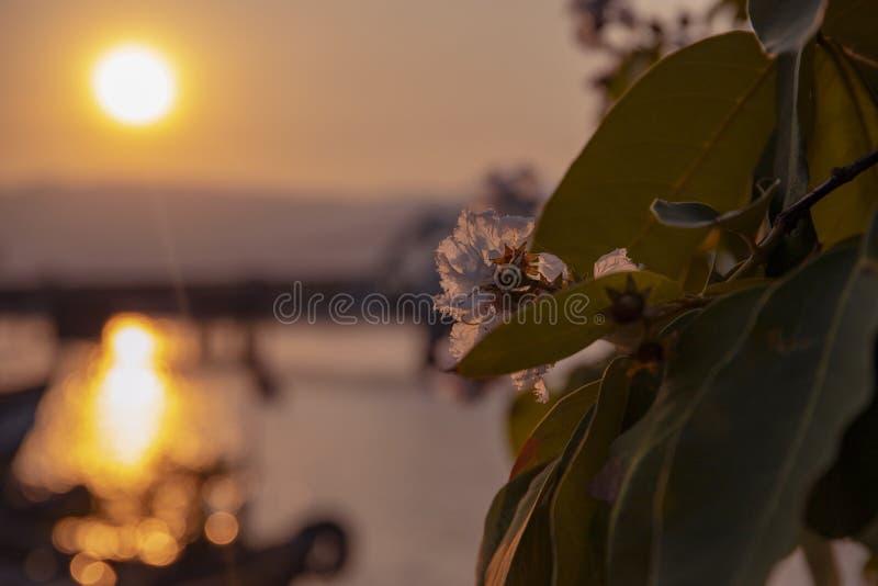 Ландшафт захода солнца с деревом реки и цветка Романтичный заход солнца в тропической стране Городской мост и залив со старым кор стоковые изображения rf