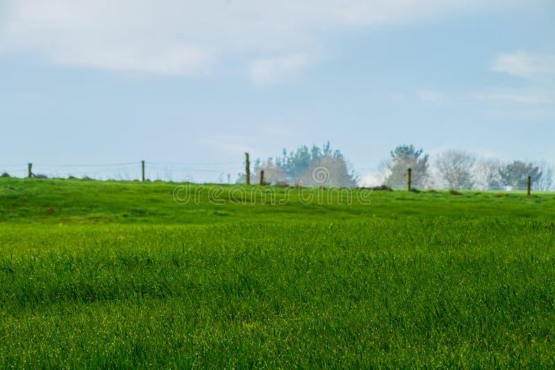 Ландшафт зеленого поля с предпосылкой деревьев стоковое фото rf
